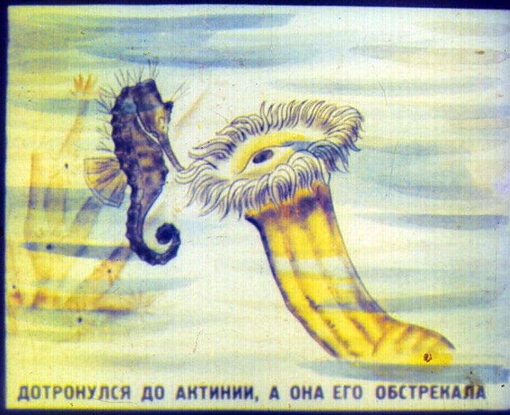 Цвет морского конька