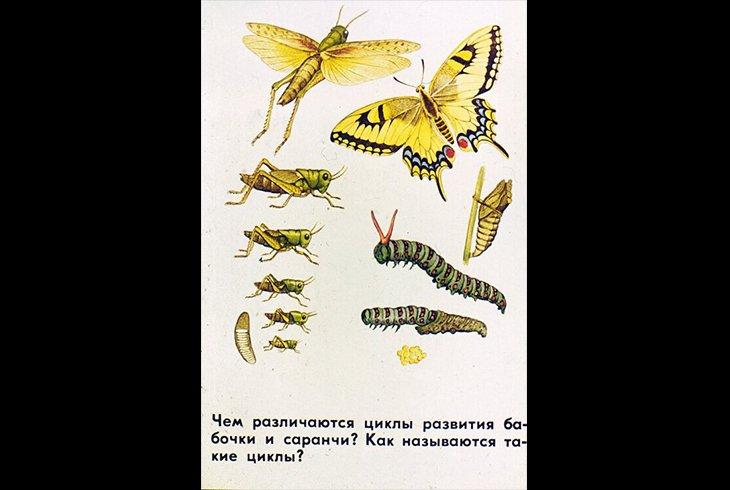 Развитие насекомых с полным и